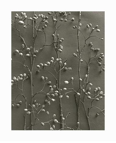 Blossfeldt-16.jpg